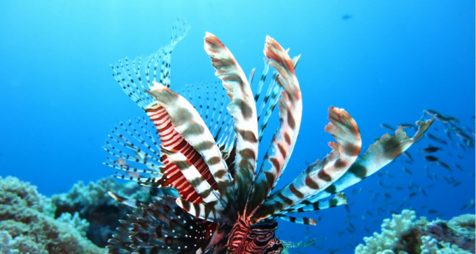Najlepsze podwodne zdjęcia według Photography Guide