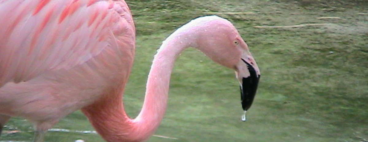 Dlaczego flamingi są różowe? - 30 ciekawostek o świecie, które zainteresują zarówno dzieci, jak i dorosłych