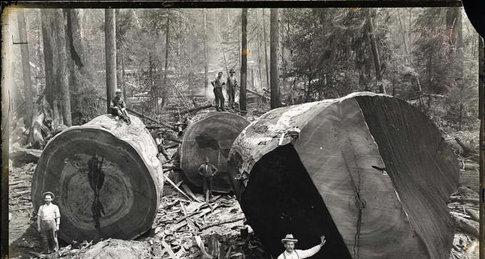 Gigantyczne drzewa Appalachów i ludzie, którzy żyli wewnątrz nich