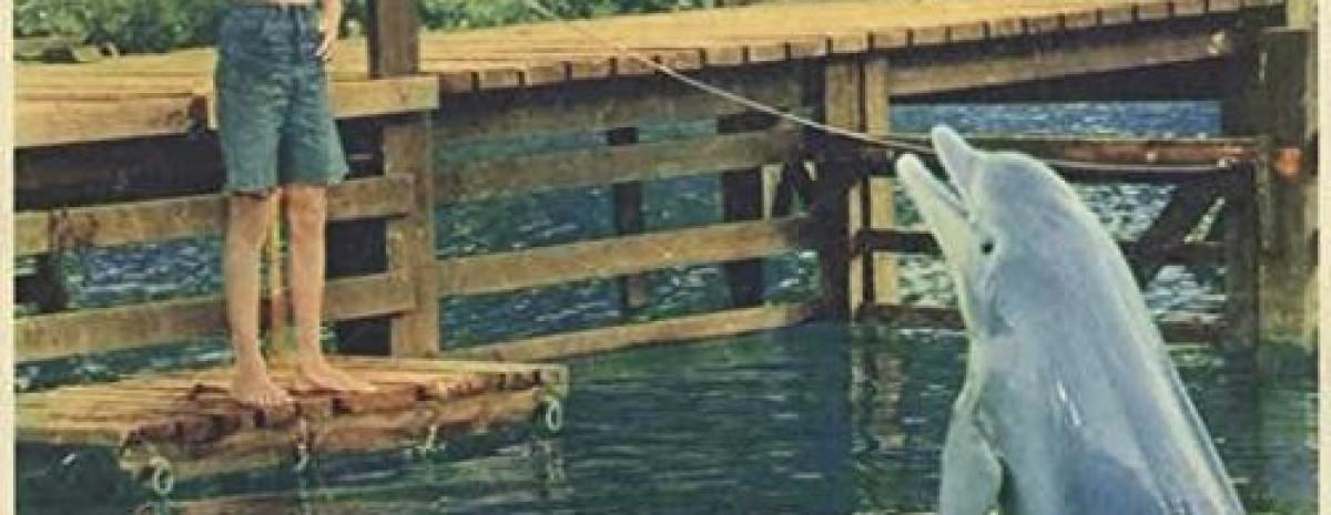 Samobójstwo delfina Kathy, która grała Flippera w serialu