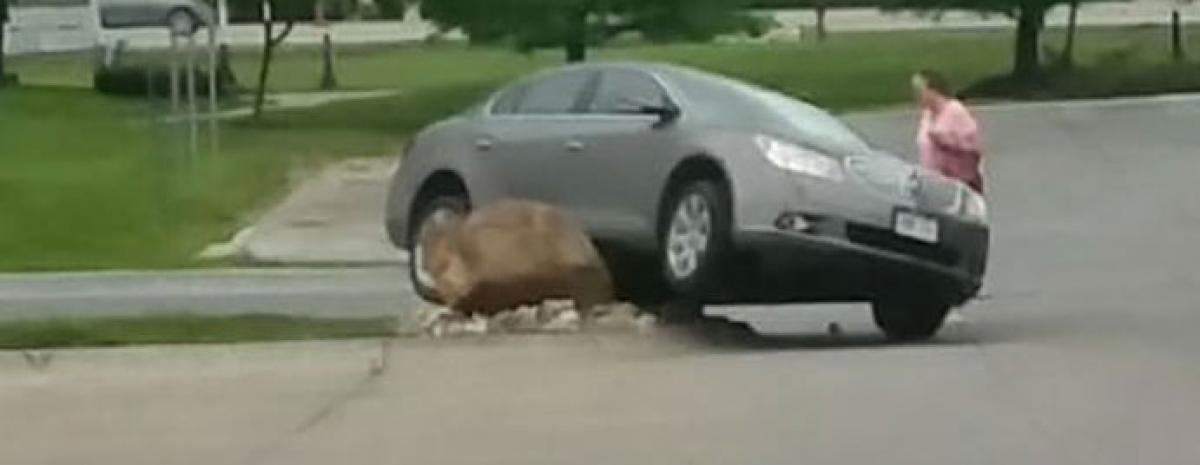 Kierowcy notorycznie ścinali krawężnik aż ktoś postawił ogromny kamień
