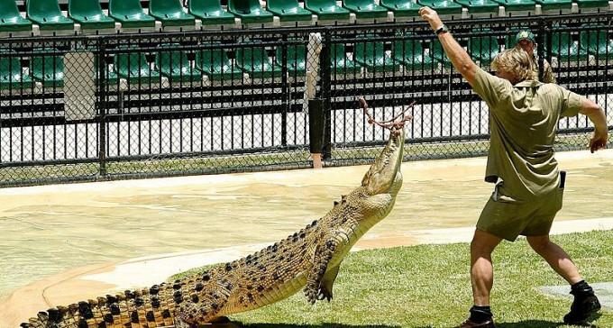 Czego jeszcze nie wiecie o Łowcy krokodyli - 15 ciekawostek o Stevie Irwinie