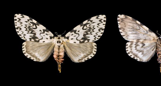 """""""Motyl morderca"""" - nie skradnie serca"""