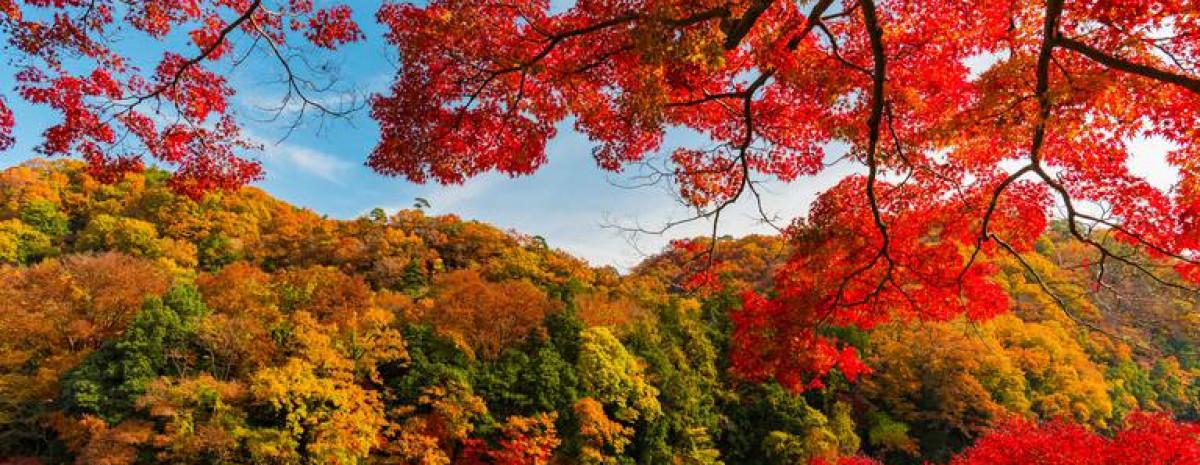 Dlaczego liście spadają na jesień, a drzewa szpilkowe nie gubią igieł?
