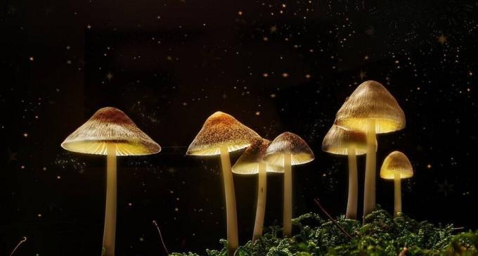 Oregon jest pierwszym stanem, który zalegalizuje grzybki psychoaktywne