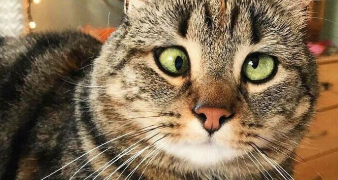 Zezowate szczęście Oliwki, czyli ukochana kotka internetu