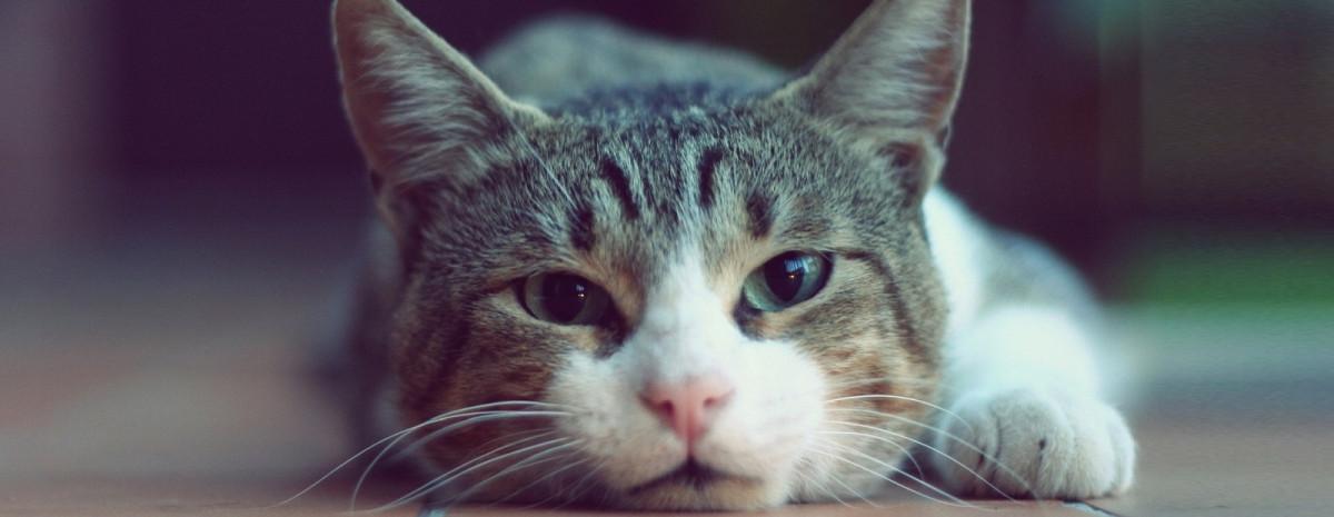 Generator komputerowych kitku - sieć neuronowa tworząca realistyczne koty